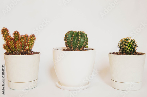 Cactus Ceramic in pot on a white space and white background.
