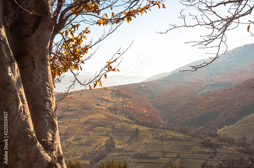 Tuinposter Cappuccino Landscapes of Autumn Carpathian Mountains