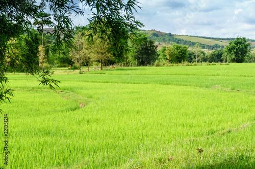 Foto op Aluminium Platteland Rice field. Laos. The Province Of Xiangkhoang.