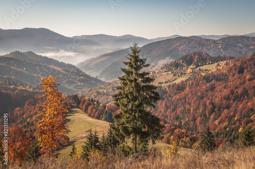Staande foto Bleke violet Landscapes of Autumn Carpathian Mountains