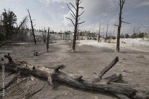 mamoth hot springs in Yellowstone, USA
