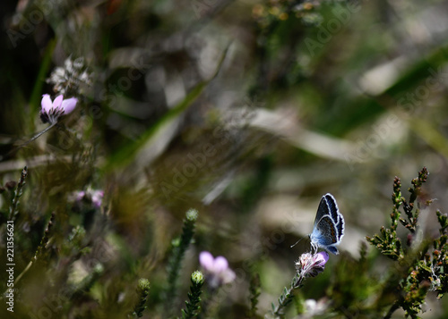 Spoed Foto op Canvas Natuur nature background,