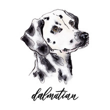 Watercolor Dog Head Illustration With Outlines And Breed Name Hand Painted Sign