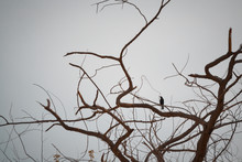 Bird On The Tree On A Cloudy Morning
