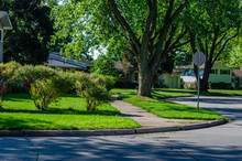 Corner Of A Curving Suburban Tree Lined Shady Street