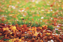 Fallen Yellow Leaves Background / Blurred Yellow Autumn Background With Leaves On The Ground, Indian Summer, October Leaves