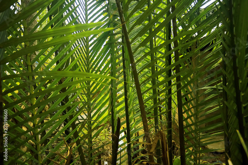 Keuken foto achterwand Bamboo Trees in the jungle in Asia