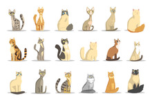 Cat Different Breeds Set, Cute Pet Animal Vector Illustrations