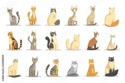 Carta da parati Cat different breeds set, cute pet animal vector Illustrations