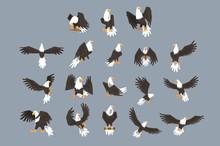 Bald Eagle Image Set On Grey B...