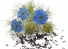 Schwarzkümmel, Blüten Und Samen