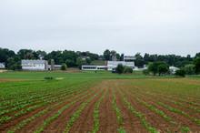 Tobacco Fields In Rural America
