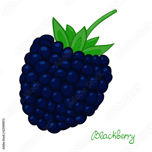 Fotografia, Obraz  ripe blackberry