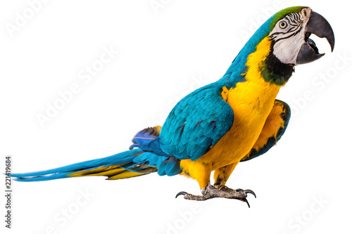 Tuinposter Papegaai Macaw Parrot isolated on white