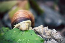 Snail Eating Vegetables, Slow Food Concept