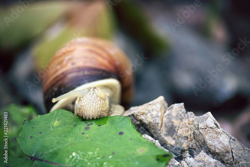 snail eating vegetables, slow food concept