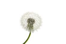 Dandelion Close-up. Air Beauti...