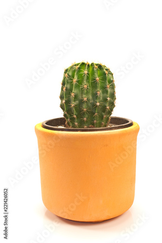 Foto op Canvas Cactus Cactus in ceramic pot isolated on white