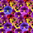 Floral seamless pattern with colorful viola flowers