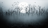 Fototapeta Landscape - dark night forest  full moon