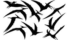 Pteranodon Dinosaur Svg Files Cricut,  Silhouette Clip Art, Vector Illustration Eps, Black  Overlay