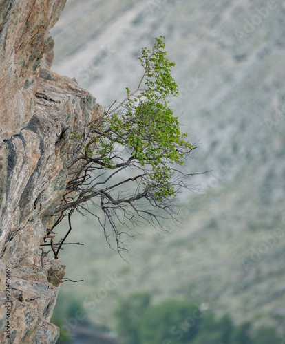 Poster Donkergrijs Nature of Altai mountains