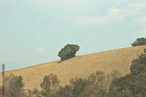 Foto  Isolated tree in the hill (Pesaro, Italy, Europe)