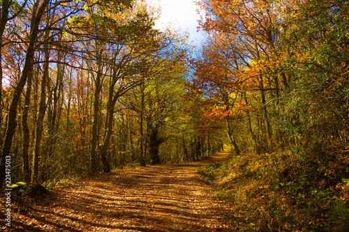 Photo  Autumn trail between orange green and brown leaves in autumn Aguilar de Campoo U