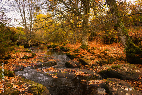 фотография  Beautiful river in autumn among brown leaves and trees Aguilar de Campoo