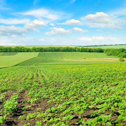 Spoed Foto op Canvas Nieuw Zeeland Hilly green field and blue sky.