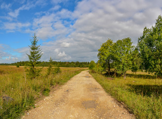 Fototapeta na wymiar The road through the field in the Leningrad region to the farm.