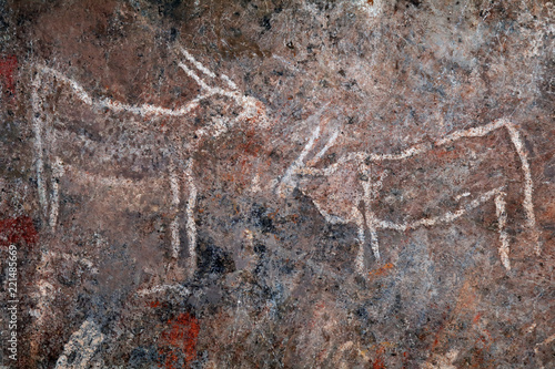 Bushmen (san) rock painting of eland antelopes, Northern Cape, South Africa.