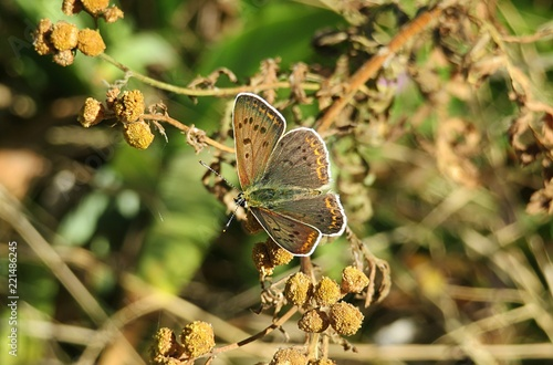 Butterfly on the plants