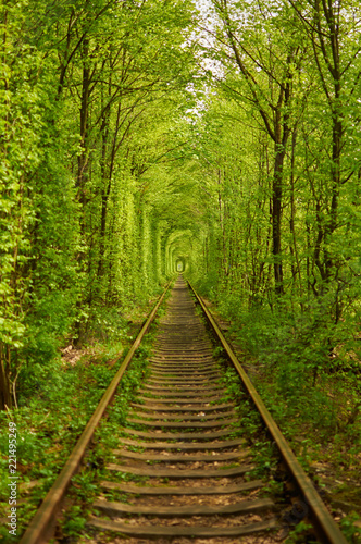 Natural tunnel formed by trees in Ukraine, Klevan called as tunnel of love