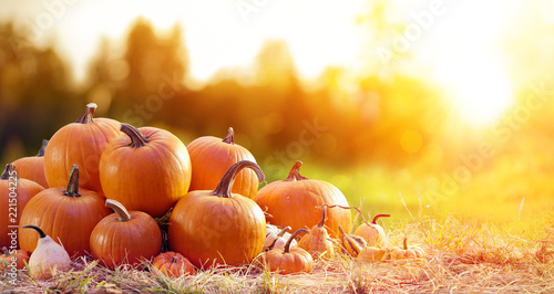 Tuinposter Herfst Thanksgiving - Ripe Pumpkins In Field At Sunset