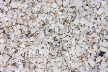 White Shells Background Texture
