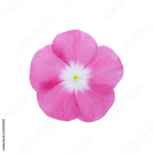 Canvas Print Isolated Madagascar periwinkle  flower