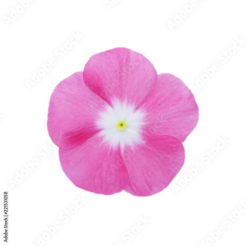 Fotografie, Obraz Isolated Madagascar periwinkle  flower