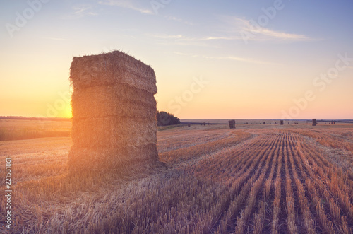 Fotografiet  Rectangular haystacks on the empty  field after harvesting illuminated by the warm light of setting sun