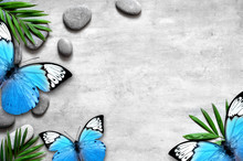 Green Plant Between The Stone Pebbles On A Gray Background And Butterfly