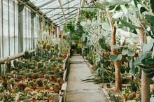 Cactus. Cacti Lover. Various C...