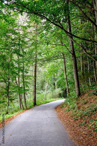 Spoed Foto op Canvas Groene simple gravel country road in summer in forest