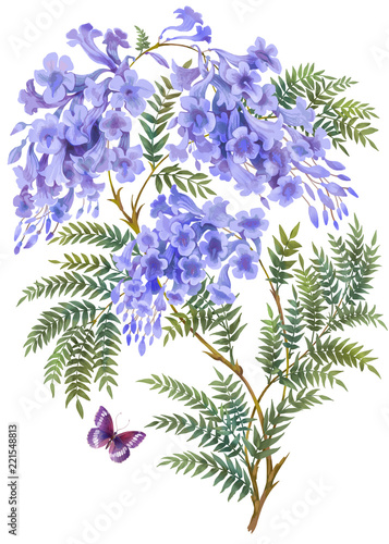 Jacaranda Tree With Flowers And Leaves Isolated On White Background Stock Illustration Adobe Stock