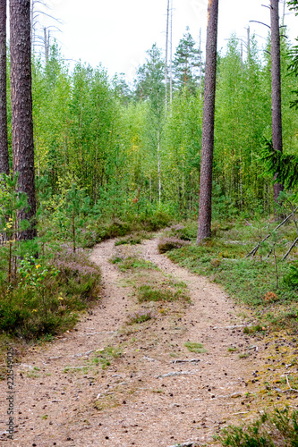 simple gravel country road in summer in forest