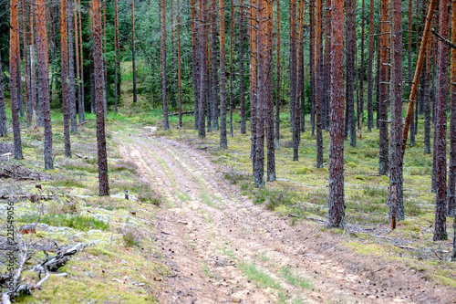 Staande foto Diepbruine simple gravel country road in summer in forest