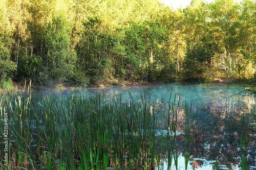 Fototapeten Wald Forest lake