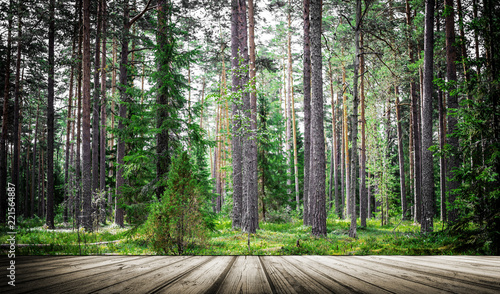 Papiers peints Nature Summer forest jungle