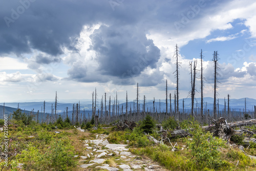 Photo  View to Dreisessel, Trojmezi and Trojmezna hills with forests destroyed by bark beetle infestation (calamity) in Sumava mountains