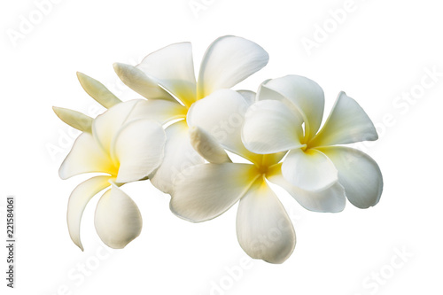 White plumeria flower isolated on white background with clipping path