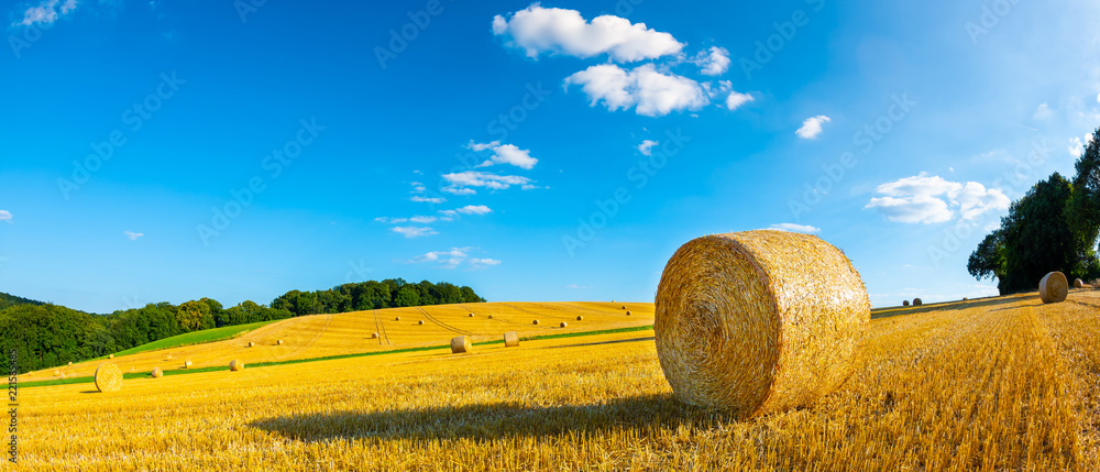 Fototapeta Landscape in summer with hay bales on a field and blue sky with clouds in the background